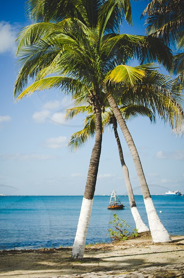 Palm trees overlooking the turquoise ocean Isla Mujeres Mexico. photo