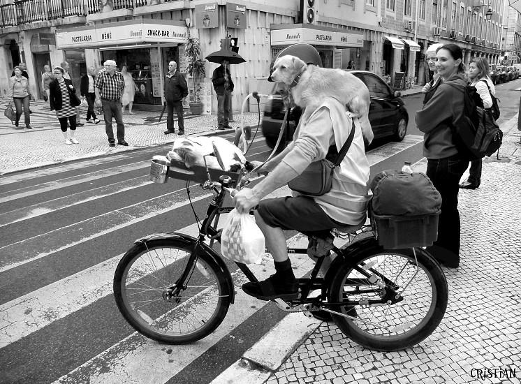 Lisbonmenbicycledogdogsblack&whiteurbanstreetcrossingmoving photo