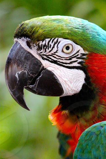green red and white macaw during daytime photo
