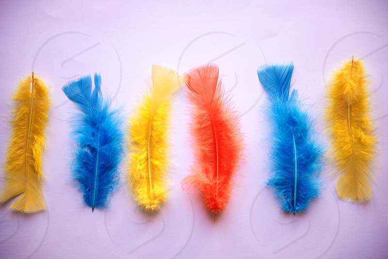 Easter colorful feathers photo