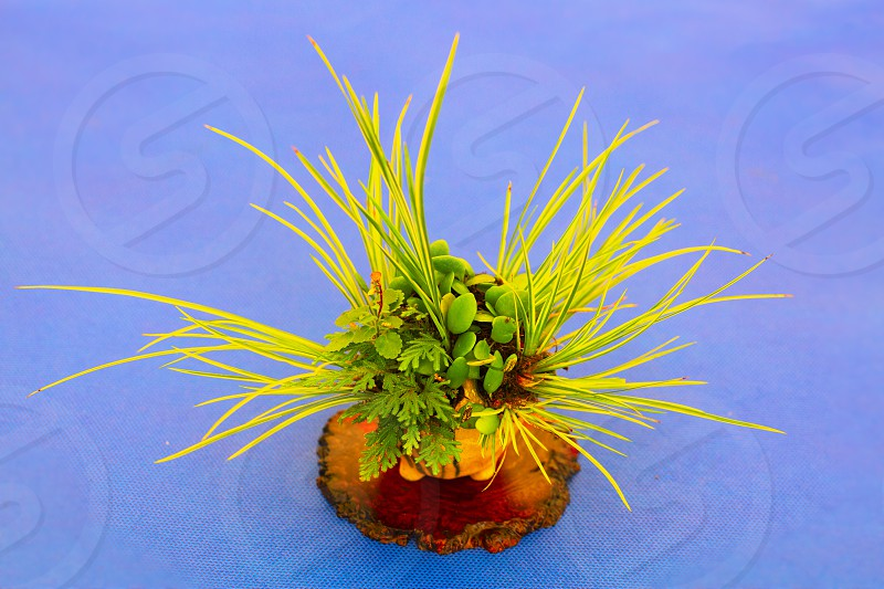 Small green plant with blue contrast background photo