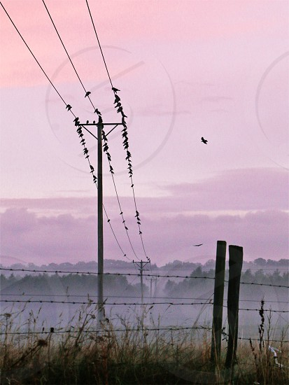 Birds on the wire at sunrise photo