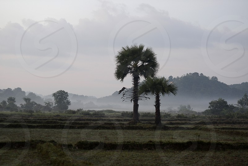 the landscape in the morning in a village near the city of Myeik in the south in Myanmar in Southeastasia. photo