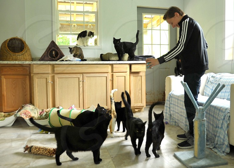 Volunteering Cat shelter photo