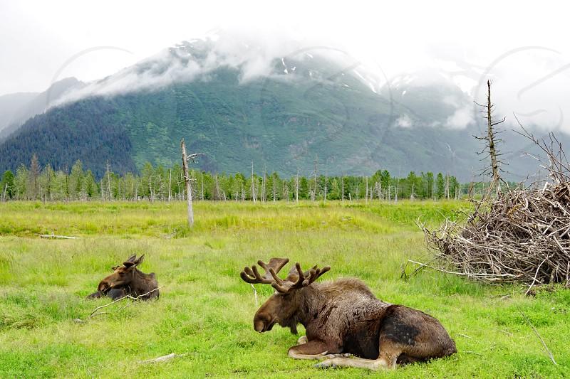 The Alaska Wildlife Conservation Center in Anchorage Alaska photo