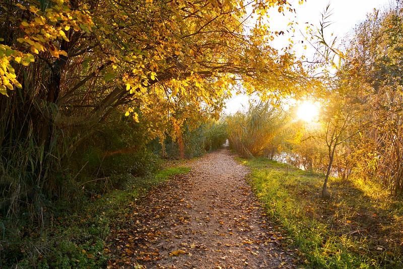 Sunset on autumn fall Parque del Turia of Valencia park in Spain photo