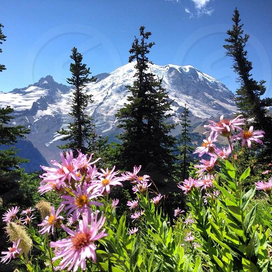 Mt. Rainier WA photo