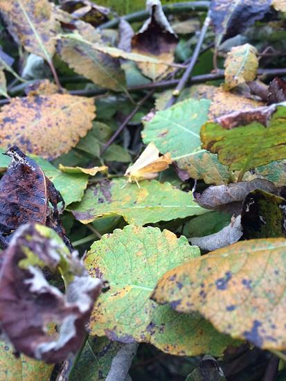 Camouflaged moth photo