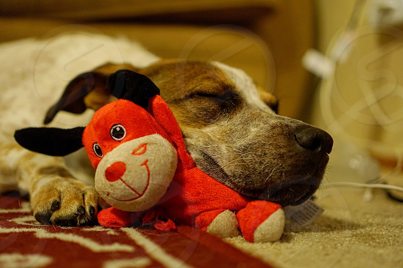 Puppy sleeping toy stuffed animal pet tired red bear candid  photo