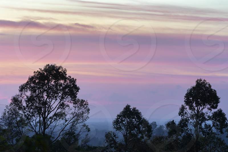 Colorful beautiful purple stripes of clouds on sky before the sunrise in the hazy early morning time. Trees silhouettes on foreground photo