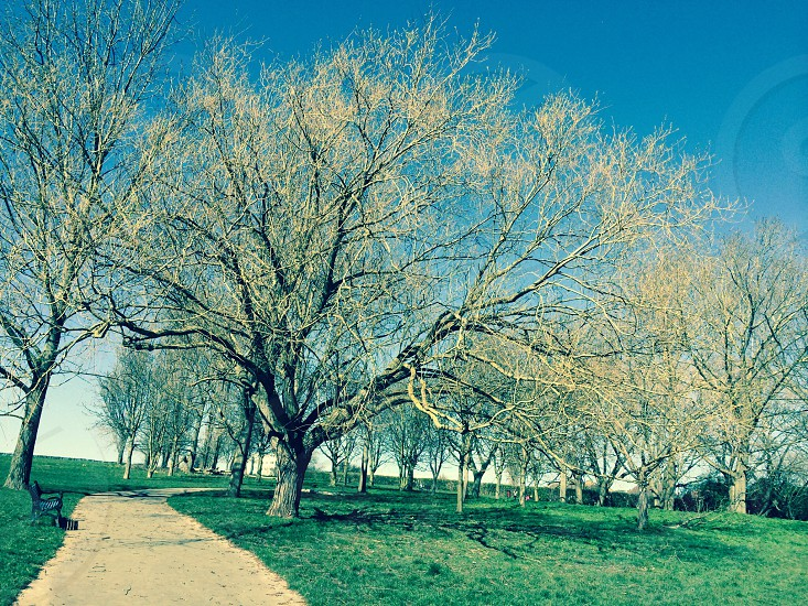 Spring tree dead alive old bright clear open air park branches big desolate greenwich photo