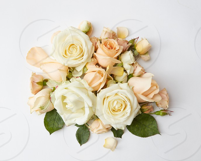 beautiful bouquet of beige roses on a white background flat lay photo