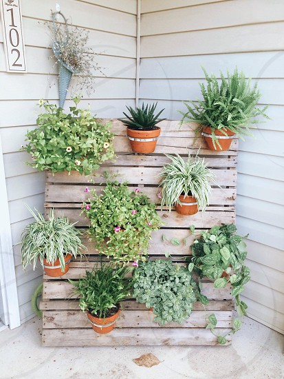 Wooden palette planter display of greenery and potted plants in a residential area. This is a great DIY project! photo