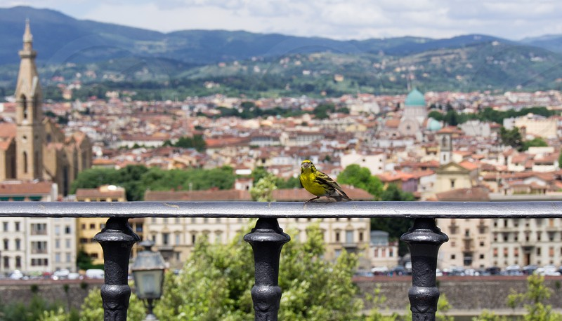 A bird overlooking the beautiful city of Florence photo