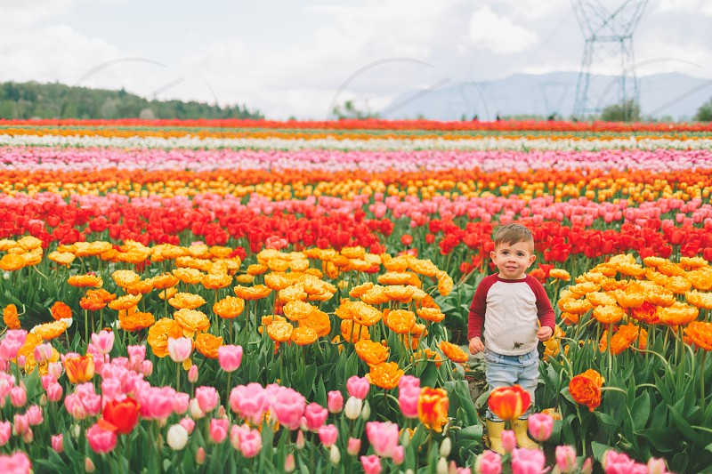 A boy standing in a vibrant field of tulips in the Spring. photo