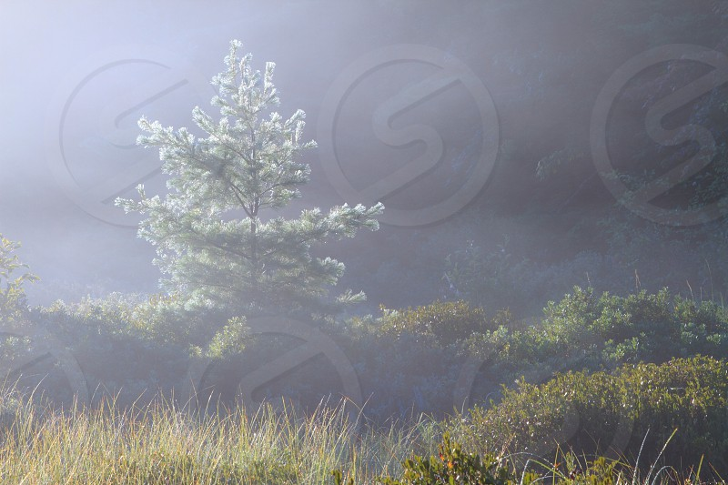 Foggy morning in a bog in Northern Michigan photo