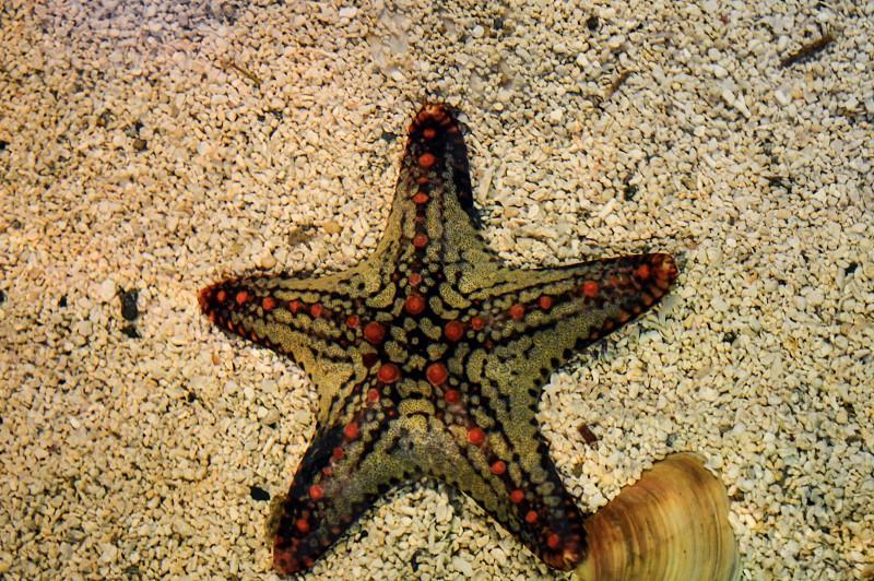 Star fish starfish sea creatures ocean creatures aquarium aquatic marina underwater life coral reefs shell sea she'll sand beach photo