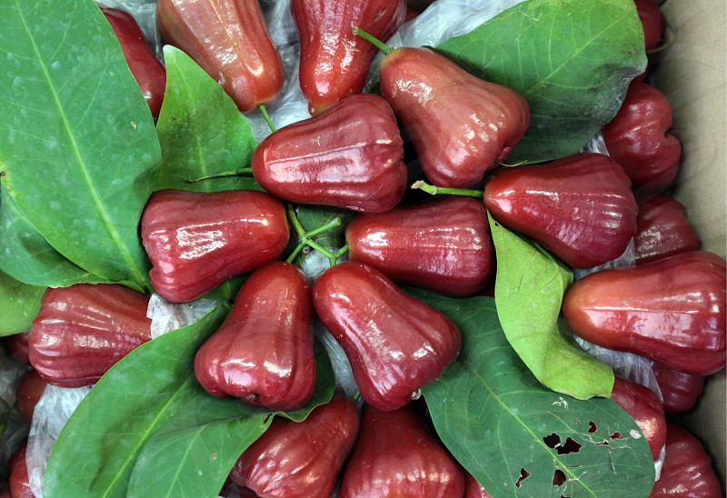 rose apple or Chum Poo  at the Pak Khlong Food Markt in Banglamphu in the city of Bangkok in Thailand in Suedostasien. photo