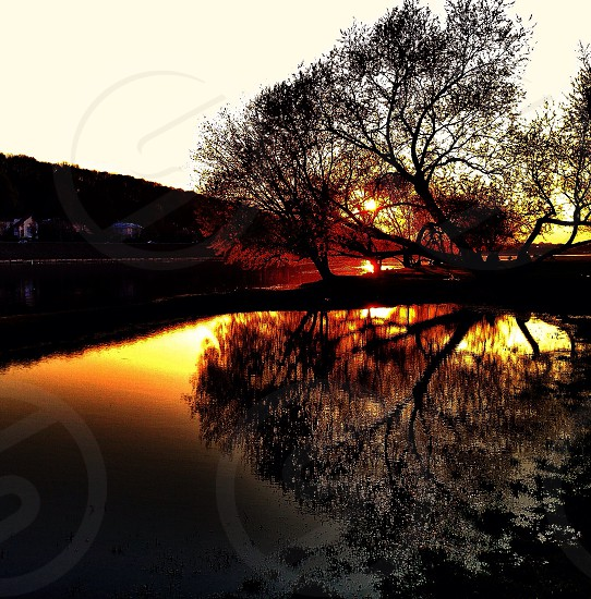 sunset view over trees panoramic photography photo