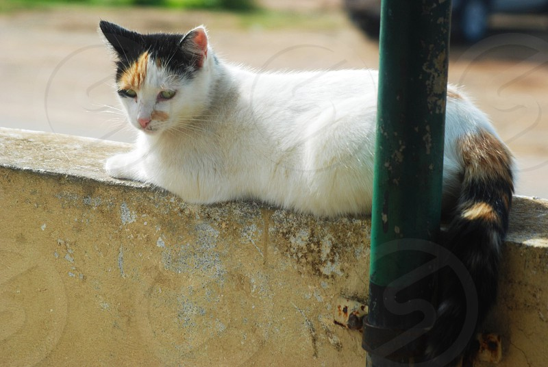 short-fur white and black cat lying on concrete levee photo