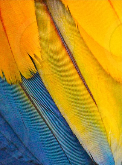 yellow and blue feather photo