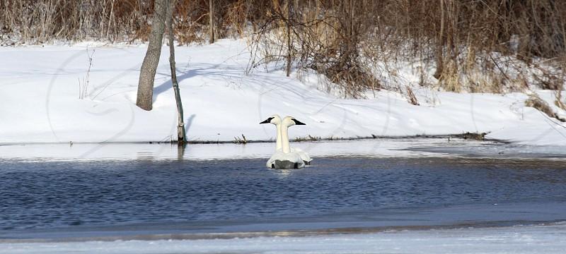 Winter migration. photo