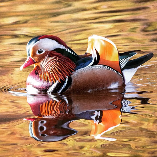 close up photo of brown yellow and orange winged animal on water photo