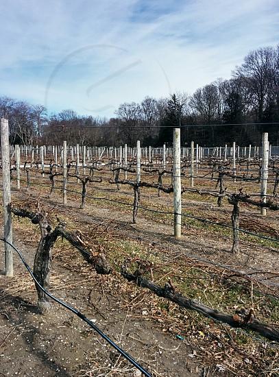 Wine Winery Winter photo