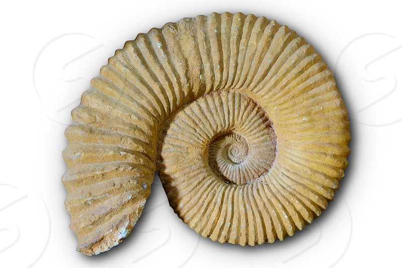 Ammonites fossil in Valencian Community of spain photo
