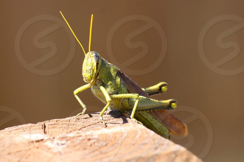 green grasshopper on brick photo