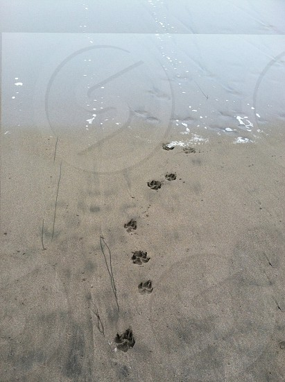 Pawprints in the sand. photo