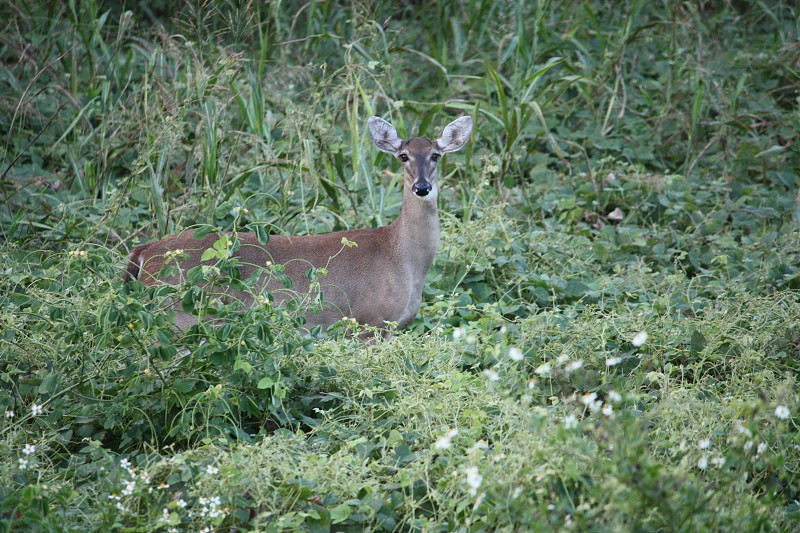 brown deer surrounded by green grass during daytime photo