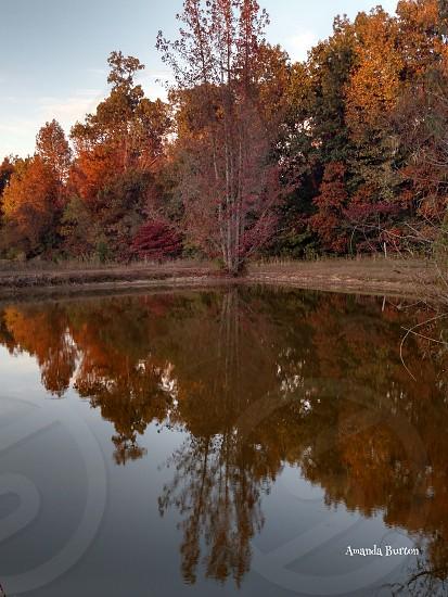 Fall colorstreespondlandscape photo