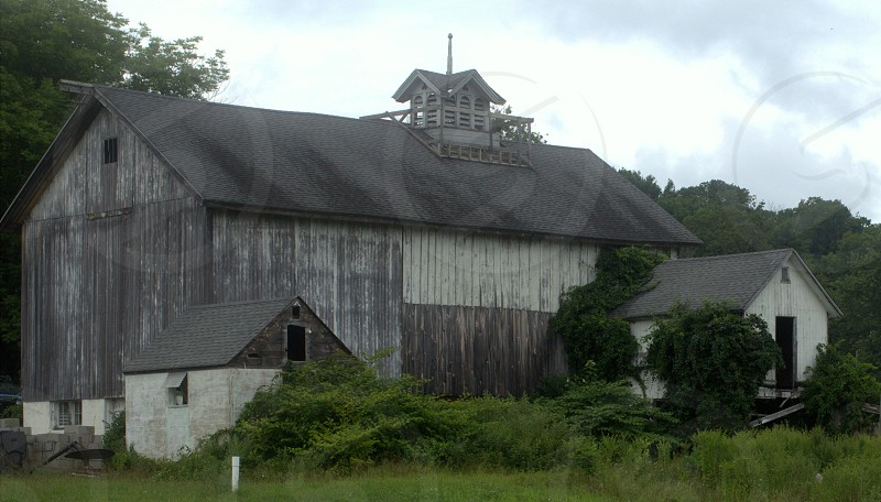 old barn with vines photo