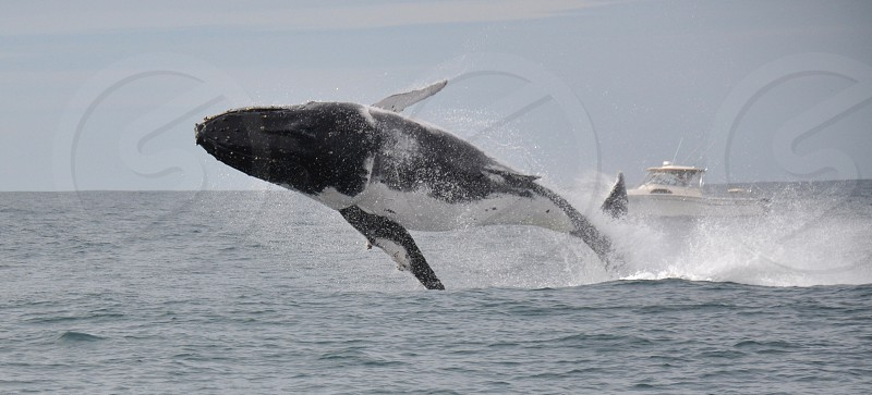 black and white whale suspended on air photo