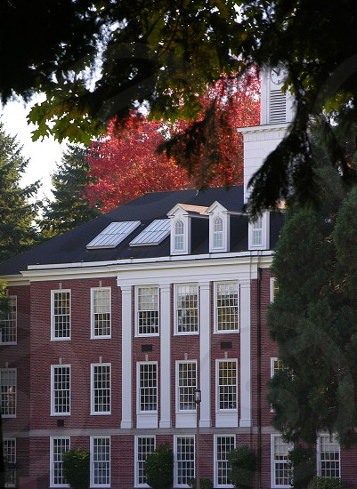 Colonial brick building with white dormers and trim; fall leaves and framed by tree branches. photo