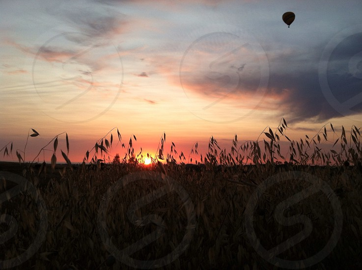 Hot air balloon at sunset over a field of grain. photo