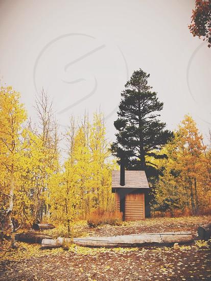 cabin wooden photo