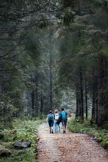 Family walking through the forest. Spending vacation on wandering with backpacks in forests photo