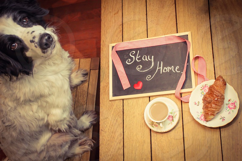 A pleading message from a lonely pet photo