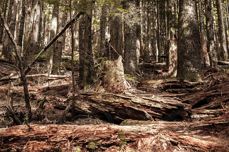 Hiking in Washington State during May 2014. photo
