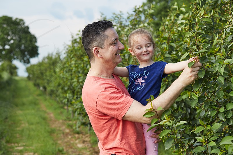 Father showing her daughter cherries growing in a orchard photo