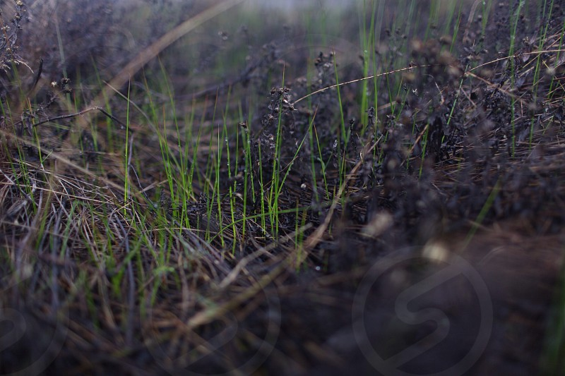 green grass blades photo