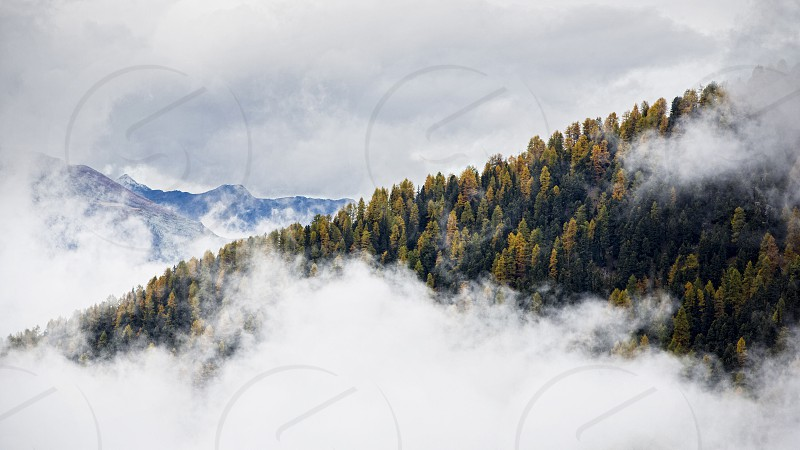 Clouds in the mountains of Switzerland. forest landscape fog photo