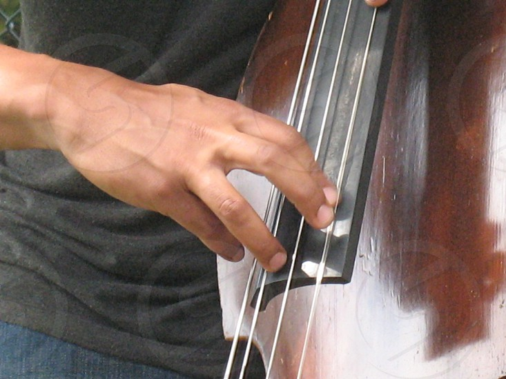 Closeup of right hand on the strings of a bass fiddle photo
