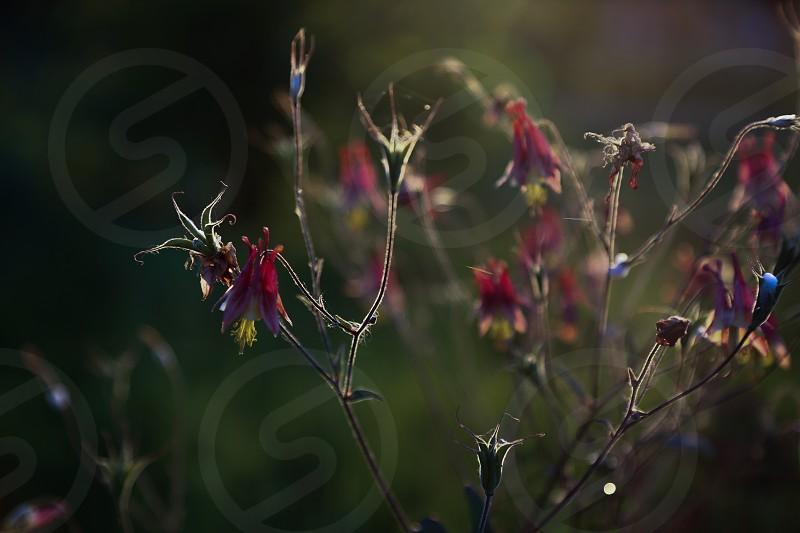 nature knobs sunrise flower flowers wild morning rise photo