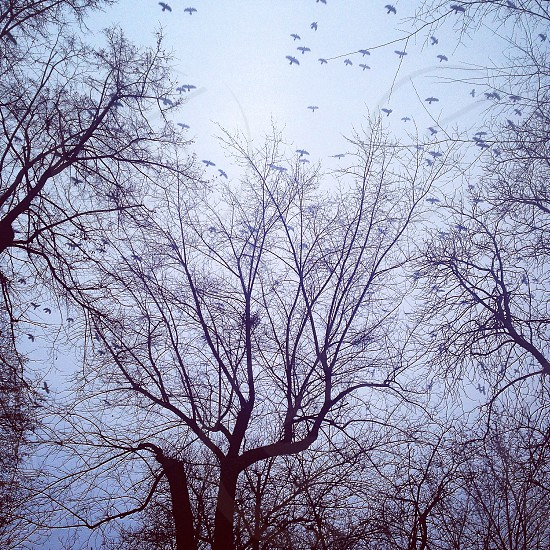Sky birds winter park iphoneonly  photo