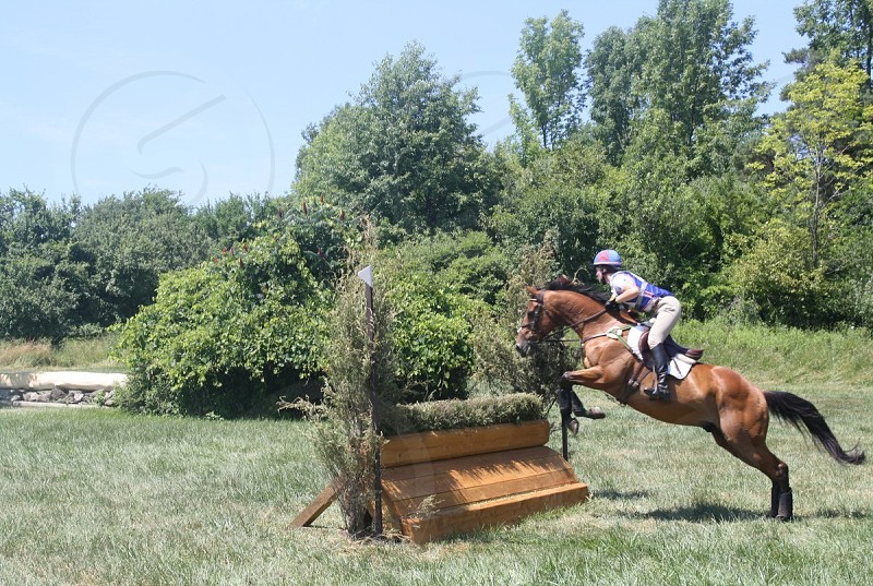 person riding brown horse galloping on brown wooden barrier photo