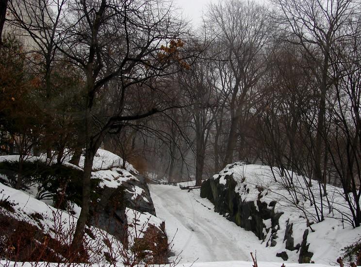 Central Park NYC February 21 2014 photo
