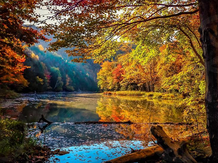 A Fairytale Nature photo